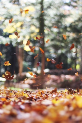 Canva - Leaves falling on ground